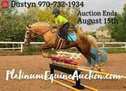 Place your bids at www.PlatinumEquineAuction.com, Kid Broke Jumper, Trail/Ranch Experience, Doctored Calves, Brandings, BROKE!!!
