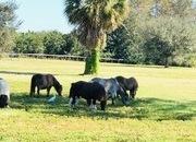 5 acres Home & Barn Loxahatchee Groves, FL