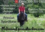 Place your bids at www.PlatinumEquineAuction.com Dressage, Jumper, Proven Sire! Great on trails, quiet and gentle!