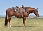 Beautiful 4 yr old Steppin On Sparks gelding! Reining/ranch/trail broke!