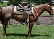 Waldo - Finished Head horse. Finished Heel horse