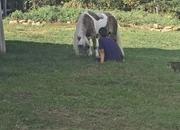 Pretty mini mare pony