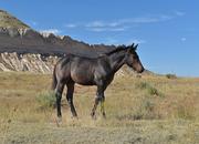 Cute roan stud colt! Hollywood Dun It bred!