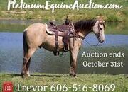Place your bids at www.PlatinumEquineAuction.com Nice trail horse, Super smooth gaited and Very Flashy, Sharp Buckskin!!!