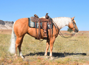 Beautiful 4 Year Old Palomino Mare!  NRHA Money Earner!  Granddaughter of Nu Chex To Cash!