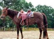 Missouri Foxtrotter Gaited Trail Gelding