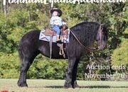 Place your bids at www.PlatinumEquineAuction.com Ranch, Trails, Harness Broke, Big Gentle and Safe for the Whole Family!!!