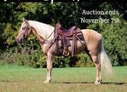Place your bids at www.PlatinumEquineAuction.com Broke/Safe trail horse, gentle for any rider on trails! Super smooth gaited and Very Flashy!!!