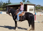Registered Mini Gypsy Gelding