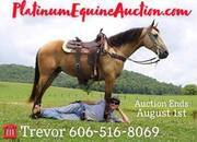 Place your bids at www.PlatinumEquineAuction.com Beautiful Buckskin, Very smooth gaited, great on trails!