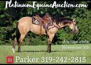Place your bids at www.PlatinumEquineAuction.com Ranch, Trails, Penning, Sorting, Roping, Fun shows, Playdays… BuckskinBeauty!!!