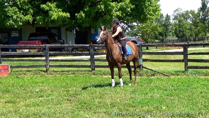 Gorgeous willing filly