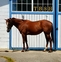 Gorgeous willing filly for sale