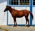 Gorgeous willing filly for sale in United States of America