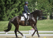 DAXL - 2013 Liver chestnut Warmblood Gelding -Cdn$$