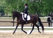 DIAMANDA -2018 Second Level Horse Of The Year -Cdn$$