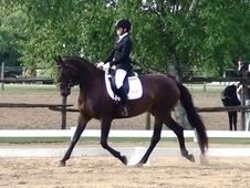 DIAMANDA -2017 First Level Horse Of The Year -Cdn$$