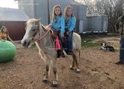 Kid Safe Family Trail Pony Mare