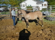 GRULLA FILLY WITH A LOT OF CHROME