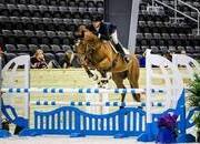 Tons of show experience - A very special horse