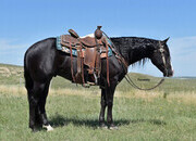 Jet Black and as pretty as can be! Ranch*Trail*Reiner*Family