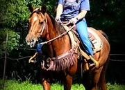 Rescue Mare Needs a Loving Home Ride Good