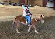 Fun All Around Pony