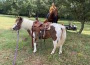 Ride and Drive Pony