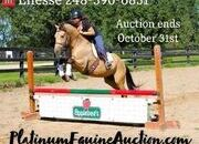 Place your bids at www.PlatinumEquineAuction.com Ranch, Trails, Penning, Sorting, Jumps, RARE BUCKSKIN FRIESIAN SPORTHORSE!!!