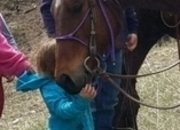 Family Ranch trail horse