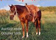 Online Auction, Top Prospect for Ranch, Roping, Cowhorse, Lots of Chrome!