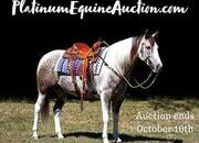 Place your bids at www.PlatinumEquineAuction.com Family safe ranch horse, gentle for any rider on trails or around the ranch! Fanciest Draftcross that you will see!!!