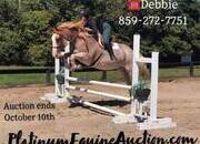 Place your bids at www.PlatinumEquineAuction.com family safe Ranch/Trail horse, Dressage prospect, proven Jumper! Can go in any direction!