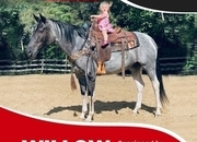 Willow - gorgeous 4 year old blue roan and white paint mare
