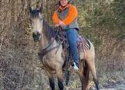 Place your bids at www.PlatinumEquineAuction.com Super smooth gaited Buckskin Beauty, Great on trails and traffic safe!