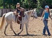 Gentle Grey Quarter Pony