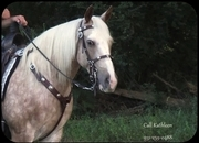 Beautiful Dappled Palomino Roan Trail Mare Simply Gorgeous