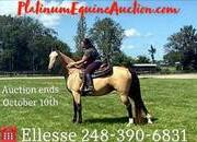 Place your bids at www.PlatinumEquineAuction.com Broke/Safe trail horse, gentle for any rider on trails! Smooth gaited and Very Flashy Buckskin!!!