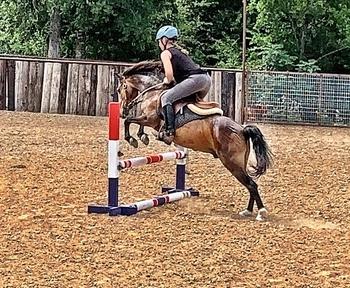 Hackney Pony Gelding - jumping