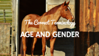 The Correct Terminology: Age/gender