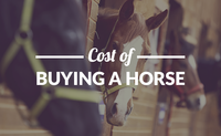How Much Does a Horse Cost?