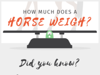 How Much Does a Horse Weigh?
