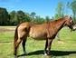 Blackstone Performance Horses and Stock