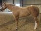 Ralph Manuel Quarter Horses
