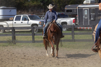 Adkins Performance Horses