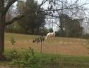 Ridgecrest Farms