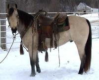 Porter Quarter Horses