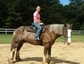 Second Chance Stables, Inc