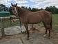Grace Horse Farm