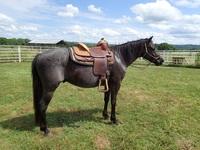Crown Diamond Quarter Horses